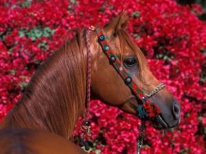 اسبهای بسیار زیبا برای پس زمینه گوشی شما