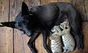 نمایش پست :سگی که در چین پرستار شد + عکس