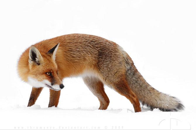 عکس های حیوانات در طبیعت