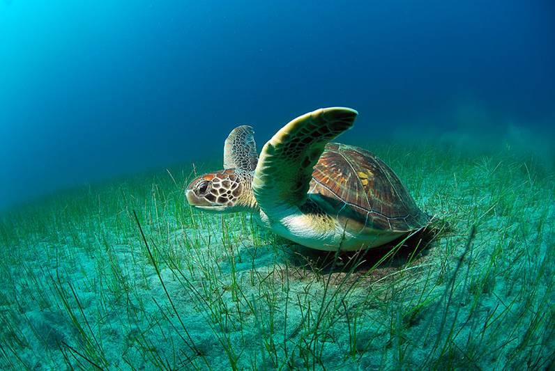عکس های جالب زیبا از دنیای زیر آب