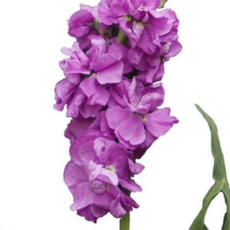 طالع بینی و روانشناسی با گلهای زیبا