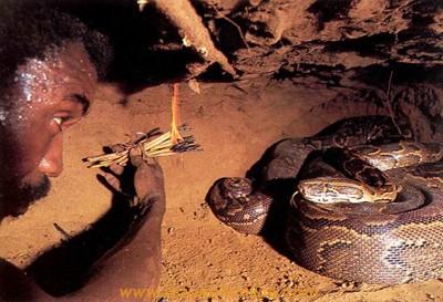 عکس های از شكار مار پیتون یا اژدها مار