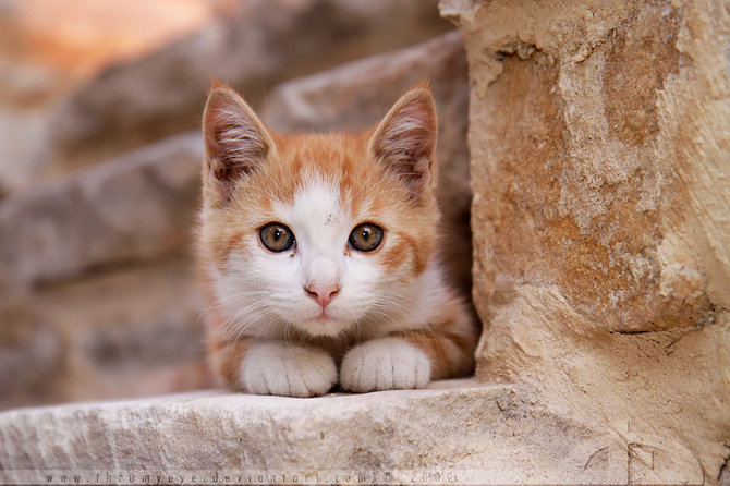 عکس های زیبا از حیوانات اهلی