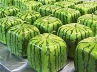 عکس های جالب از هندوانه مکعبی