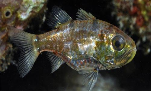 نمایش پست :عکسهایی از کشف گونه های جدید ماهی