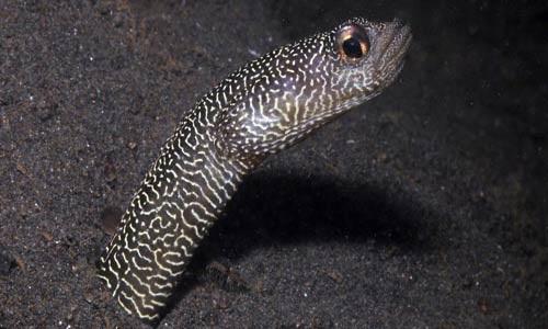 عکسهایی از کشف گونه های جدید ماهی