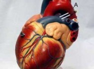 یک روش عجیب برای محافظت از قلب !!
