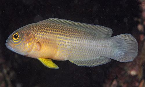 -عکسهایی از کشف گونه های جدید  www.parsnaz.ir