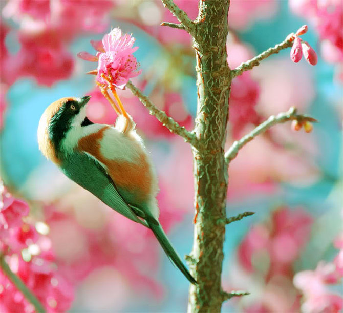 نمایش پست :تصاویر بسیار زیبای پرندگان
