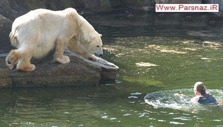 حمله خرس های قطبی به زن 32 ساله