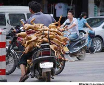 کشتن ۱۵۰۰۰ سگ برای تهیه غذا در فستیوال سگی!+ (عکس)
