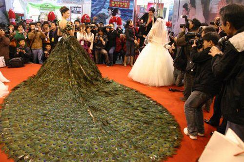 گرانترین لباس عروس دنیا از پرهای طاووس..( تصاویر)