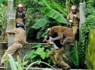 عکس از حمله پلنگ به انسان..!