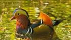 عکس هایی از قدرت بی نظیر خداوند در آفرینش طبیعت رنگارنگ