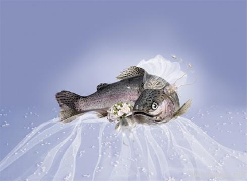 مراسم انتخاب زیباترین عروس جهان + طنز تصویری