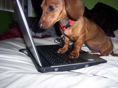 عکس های خنده دار از حیوانات و علاقه به کامپیوتر