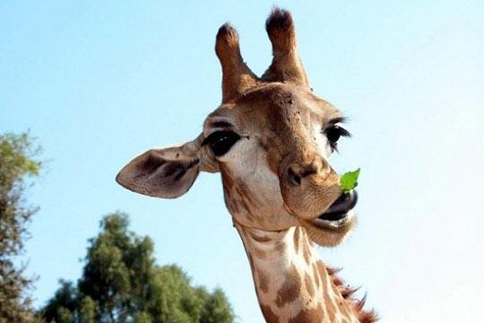 عکسهای خنده دار از فتوشات های جالب حیوانات