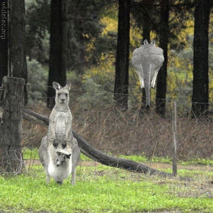 عکسهای جالب و دیدنی از شکار لحظه ها