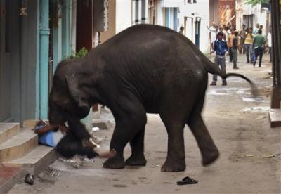 تصاویری از کشتن یک انسان توسط فیل