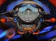 چهره واقعی حشرات را از نزدیک ببینید