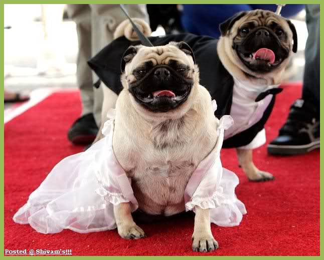 عکس هایی از عروسی حیوانات در سراسر جهان