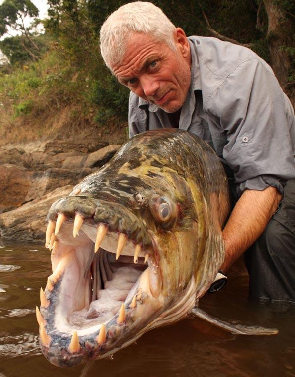 عکس های عجیب ترین ماهی های گوشتخوار جهان