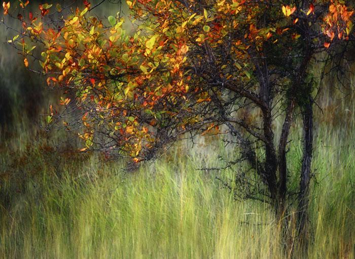 عكس ها و تصاوير زيباي فصل پاييز براي اينستاگرام