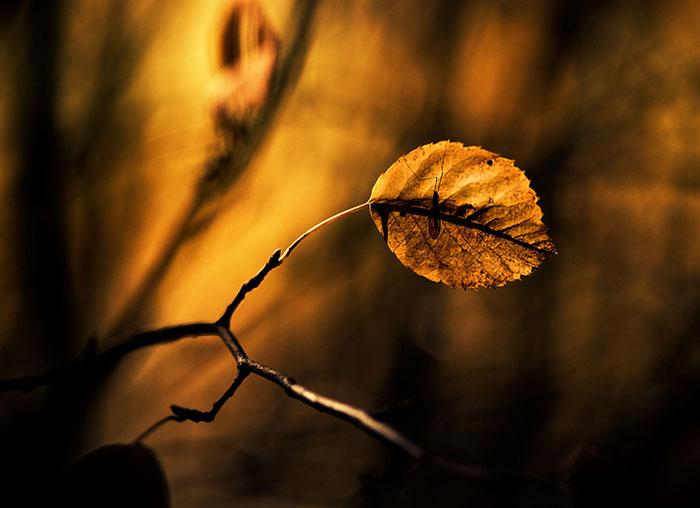 عکس های زیبای پاییز