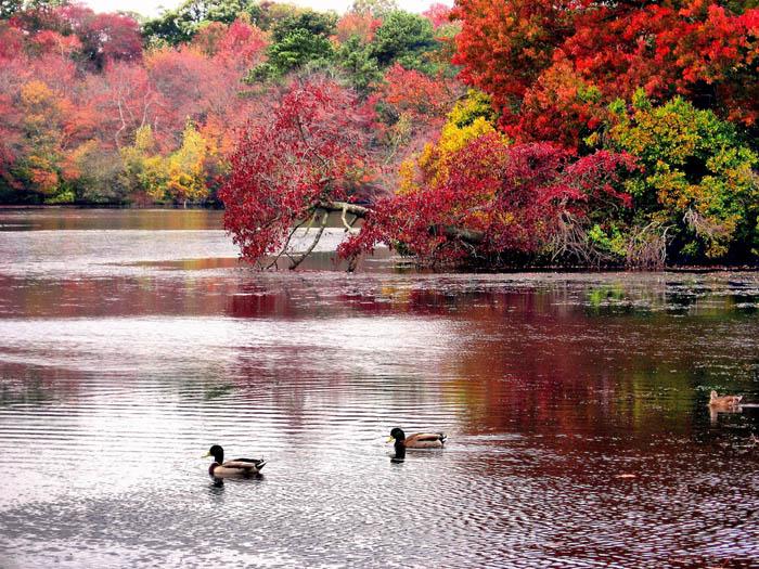 عکس های بسیار زیبا و دیدنی از فصل پاییز