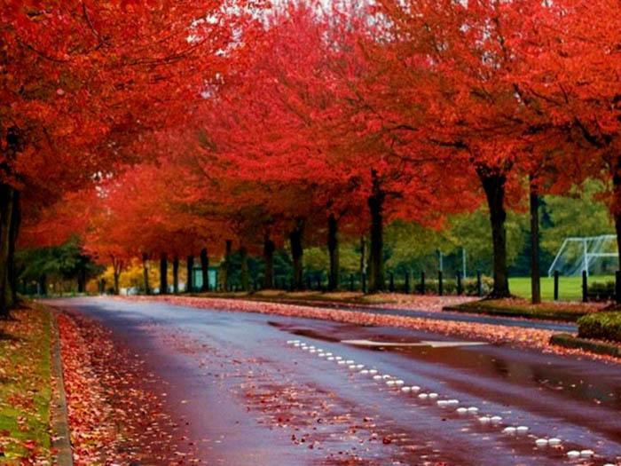 عکس های زیبا فصل پاییز