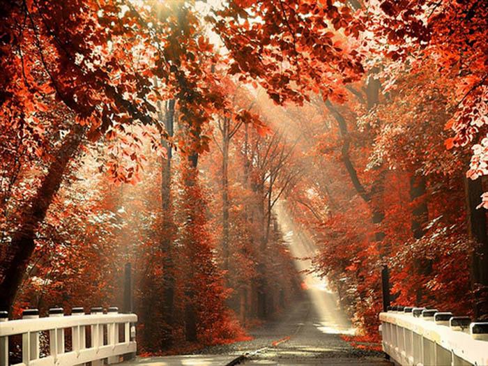 عکس زیبا از طبیعت پاییز