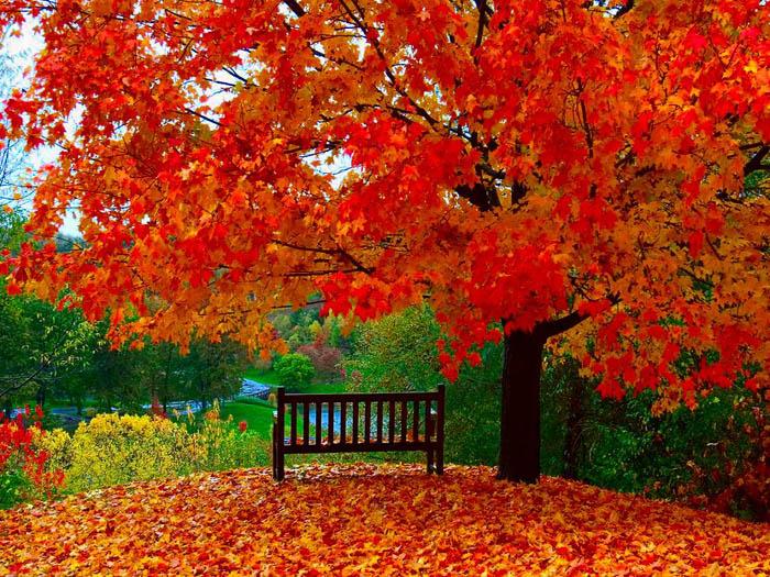 عکس های زیبایی از فصل پاییز