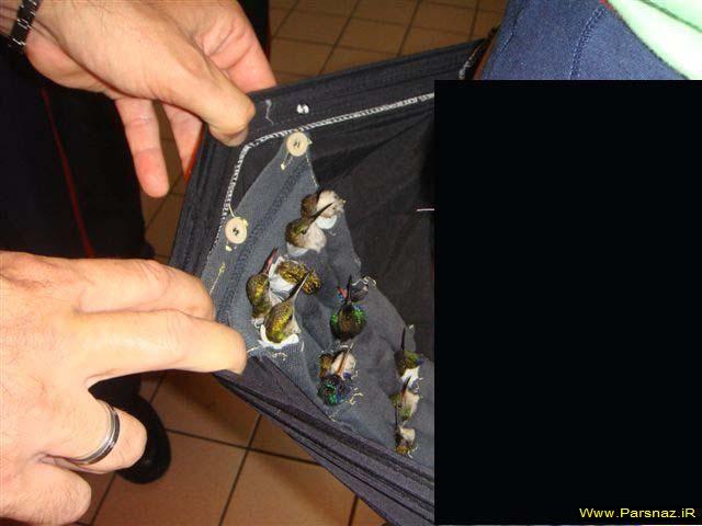 عکس هایی از قاچاق باور نکردنی پرندگان