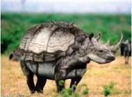 خنده داتر ترین عکس های فوتشاپ شده از حیوانات