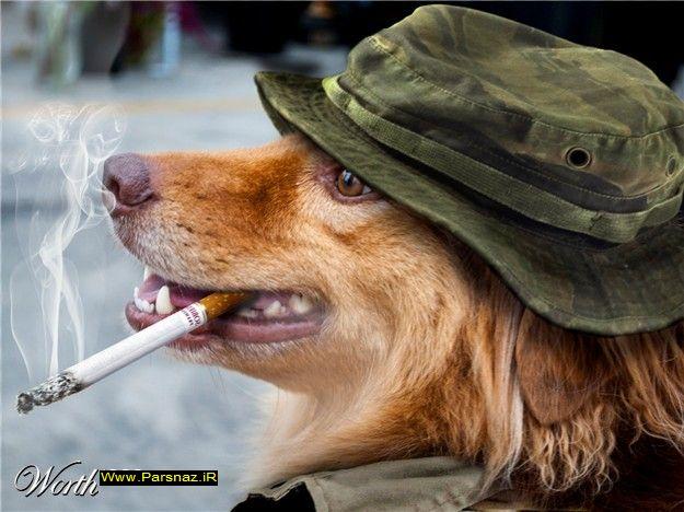 عکس های بسیار خنده دار از سگ ها