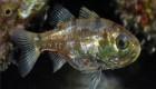 کشف گونه های جدید ماهی + (عکس)