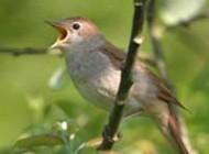 شخصیت شناسی با پرندگان +!!