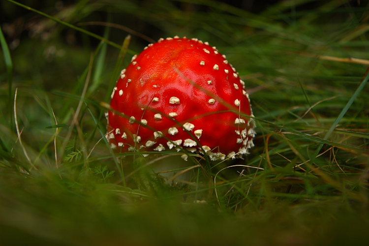 عکس هایی از زیباترین قارچ های جهان