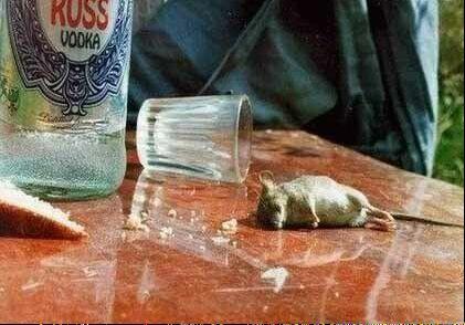 www.parsnaz.ir - عکس های بسیار خنده دار از حیوانات