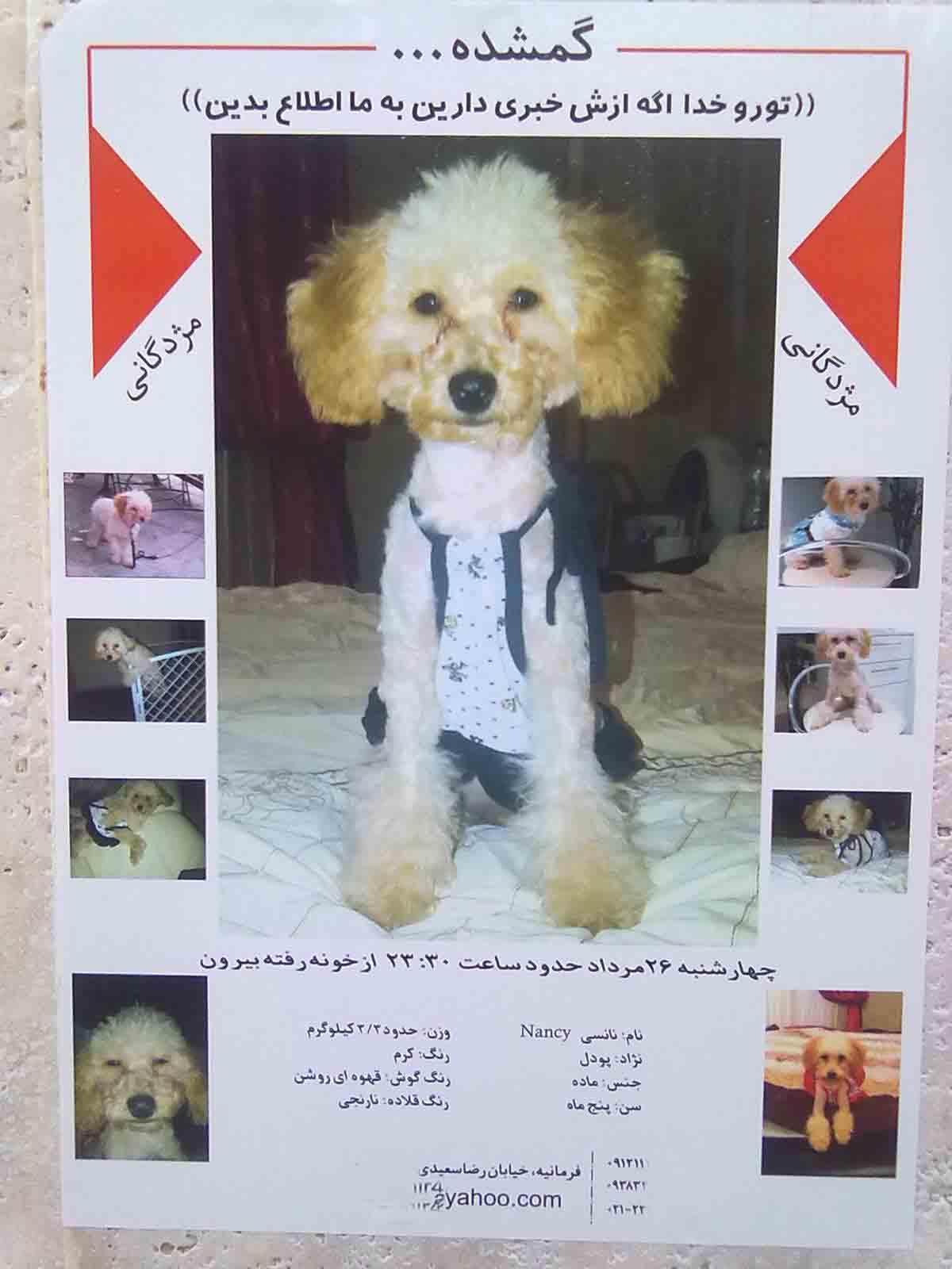 آگهی پیدا کردن نانسی در شمال تهران +تصویر