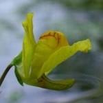 www.parsnaz.ir - خطرناک ترین گیاهان دنیا + عکس