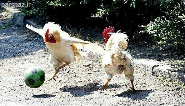 عکس های بسیار خنده دار از حیوانات