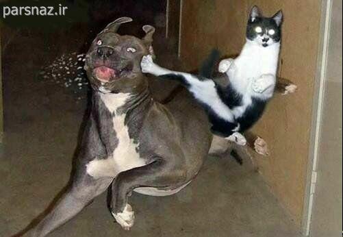 تصاویر خنده دار از حیوانات