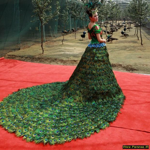 تهیه یک لباس عروس زیبا با 3000 پر طاووس + تصویر