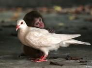 عکسهای زوج های خنده دار و نا متعارف بین حیوانات