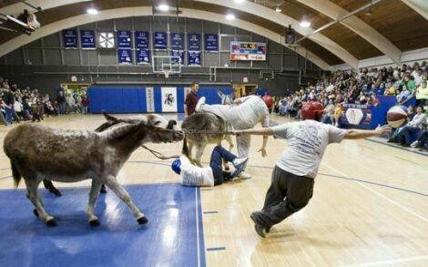 www.parsnaz.ir - عکسهای خنده دار از مسابقه بسکتبال با الاغ ها