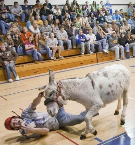 www.parsnaz.ir - عكسهای خنده دار از مسابقه بسكتبال با الاغ ها