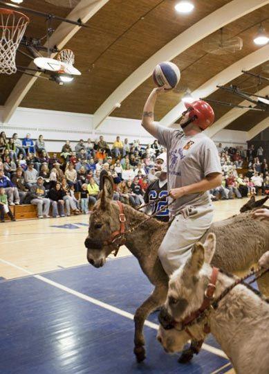 عكسهای خنده دار از مسابقه بسكتبال با الاغ ها