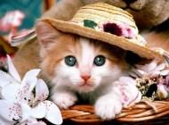عکس پیرترین گربه دوسر دنیا و ثبت شده در گینس