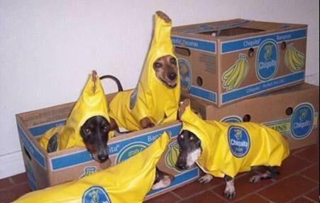 عکس های جالب و خنده دار از شو فشن سگ ها